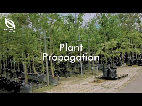Propagating Plants   OneMillionTrees Nursery Tutorial Series