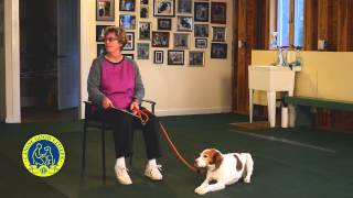 Akc Canine Good Citizen Test10: Supervised Separation