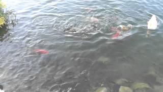 Peces En El Parque