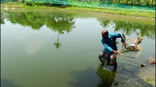 Net Fishing | Catching Fish By Cast Net | Net Fishing in the village (Part-39)