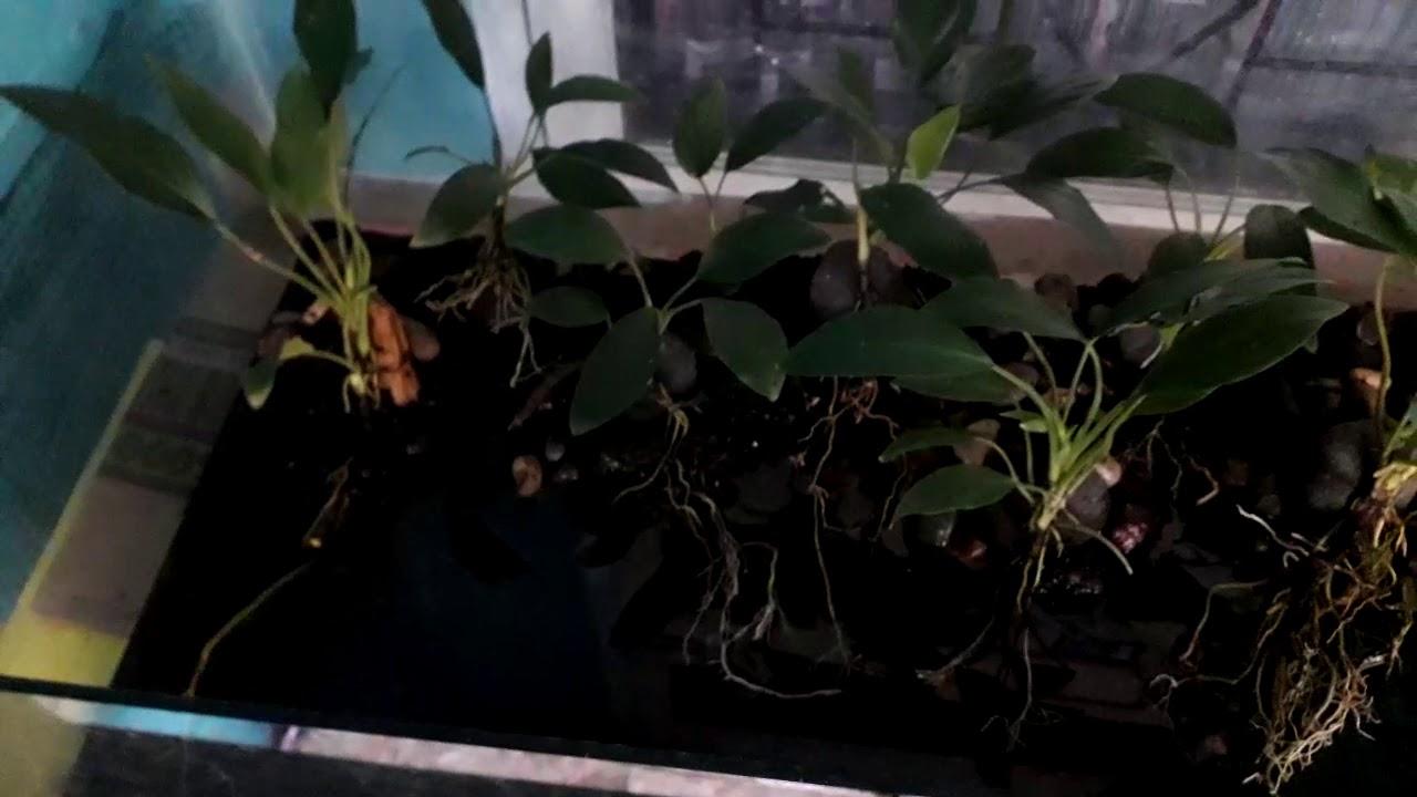 Belajar membuat aquascape dari tumbuhan air di sekitar ...