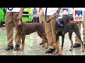 Kochi police get trained police dog for law and order department  | Manorama News