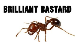 The Ingenious Ant: A Conversation with Colin