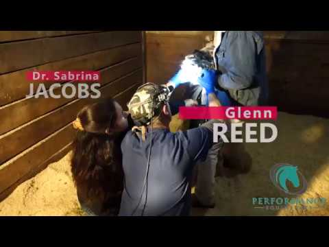 Reed Equine Dentistry - Corrective Float of Mini Horse