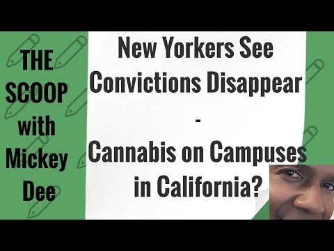 NEW YORKERS SEE MARIJUANA CONVICTIONS DISAPPEAR - CANNABIS ON CAMPUS -THE  SCOOP