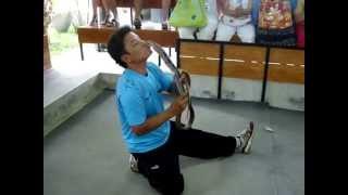 Шоу со змеями в Таиланде - жесткое видео!