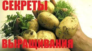 Выращивание картофеля. Секреты посадки картофеля.(В этом видео изложены основные секреты выращивания и посадки картофеля. Желаем Вам БОЛЬШИХ урожаев!!! Какая..., 2016-04-28T18:24:43.000Z)