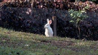 Rabbit Fencing | Farm Raised With P. Allen Smith
