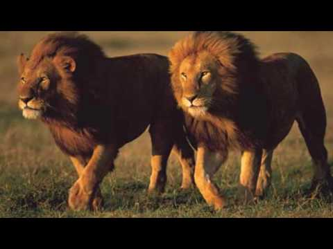 Nuer Lions