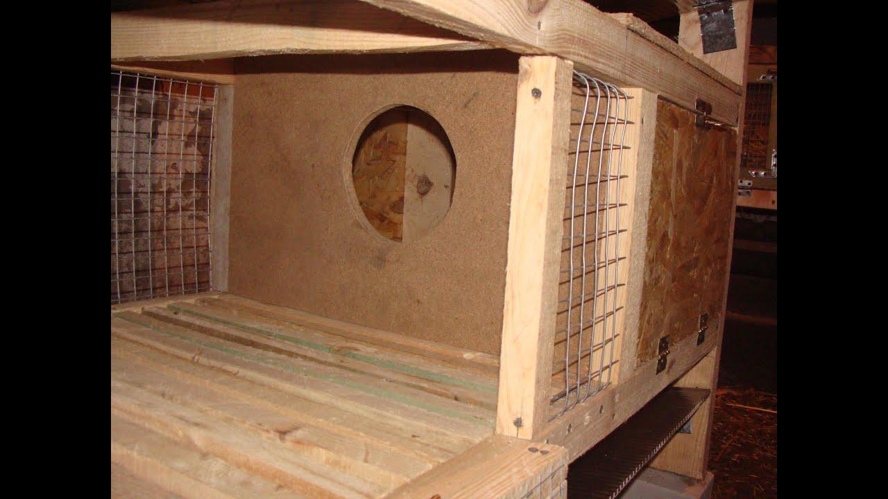 маточник для кроликов размеры фото