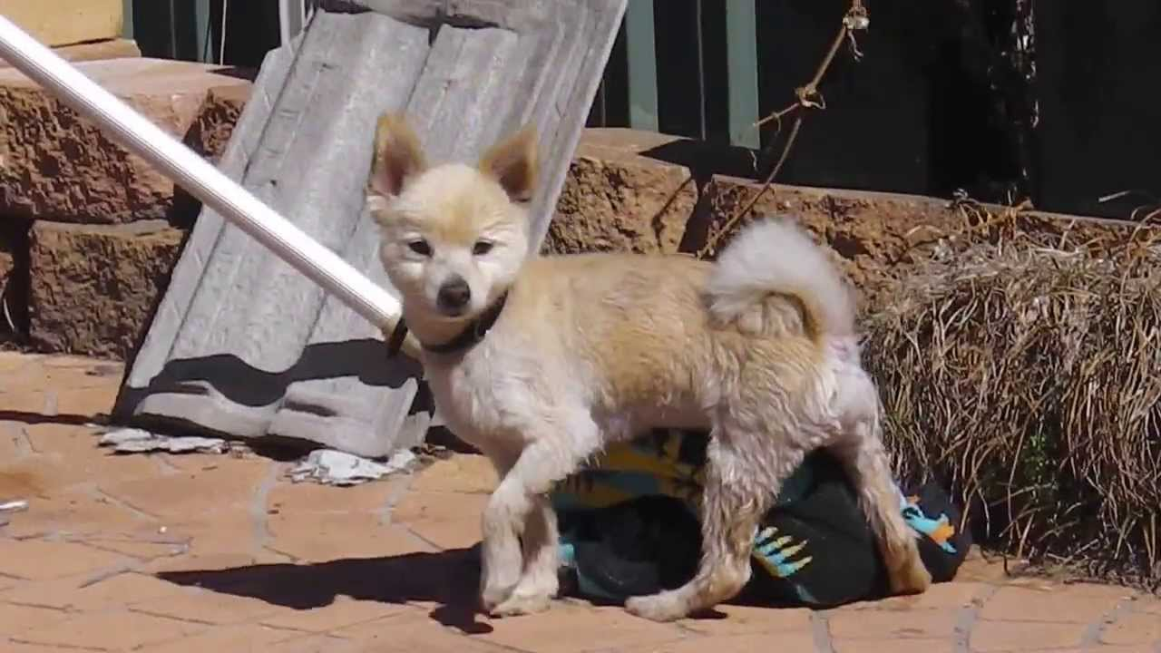 Male Dog Humps Female Towel For Pleasure - Youtube-8466