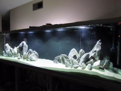 Huge African Cichlid Tank