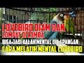 Tips Cara Mudah Melatih Mental Lovebird  Mp3 - Mp4 Download