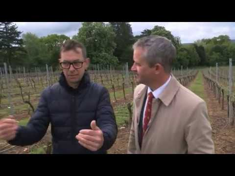 UK wine industry hit by frost affecting English vineyards