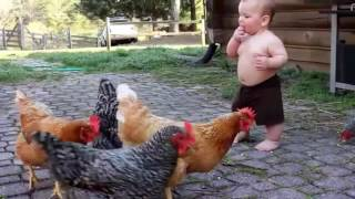 funny chicken videos