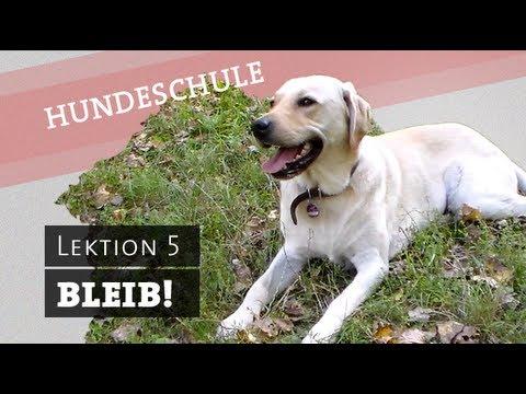BLEIB - Hund Befehl bleib beibringen, bleiben, warten Befehl Hundetraining Platz Sitz