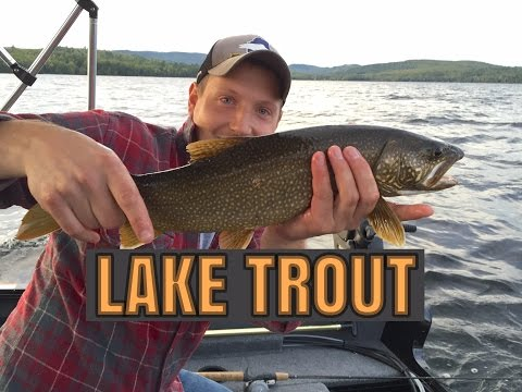 TROLLING FOR LAKE TROUT!! - EARLY FALL In Maine