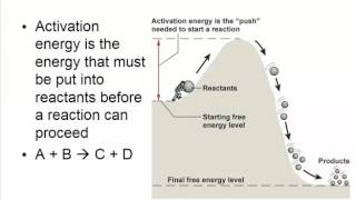 Chapter 4   Pt1   Energy and Metabolism ATP