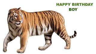 Boy  Animals & Animales - Happy Birthday