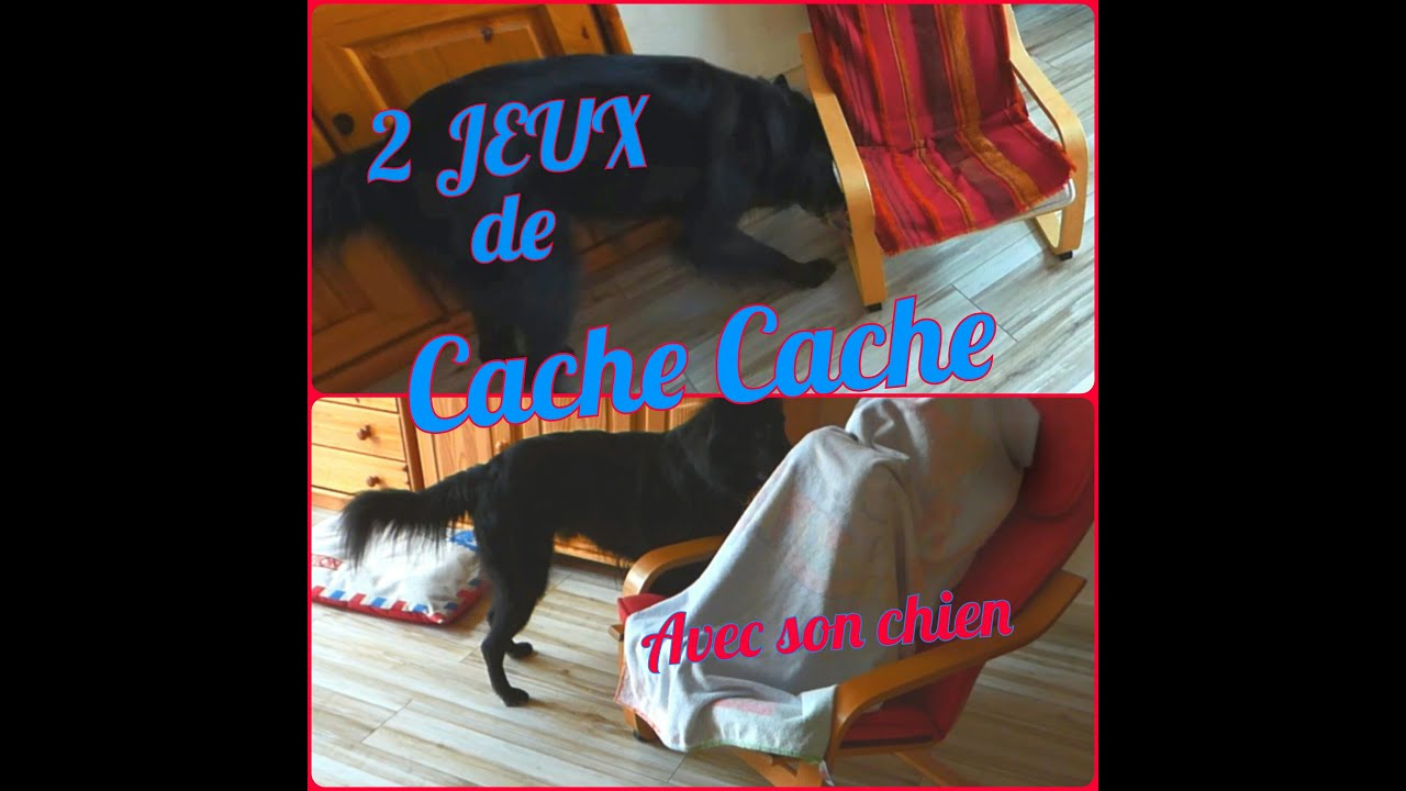 jeux 2 jeux de cache cache avec son chien youtube. Black Bedroom Furniture Sets. Home Design Ideas