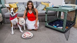 4th of July Pet Safety with Laura Nativo