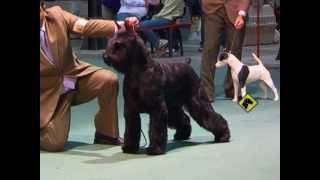 """""""perros En Acción"""" Kennel Club Santa Fe"""