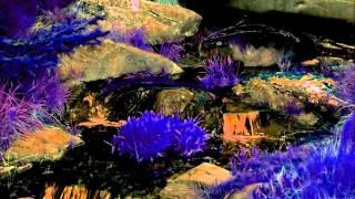 8 Hour Magic Spell - Dragon Energy Summoning Spell - Solfeggio, Binaural Beat, Mideaval, Meditation