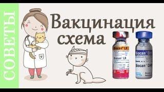 Вакцинация. Еще раз о главном. Советы ветеринара.