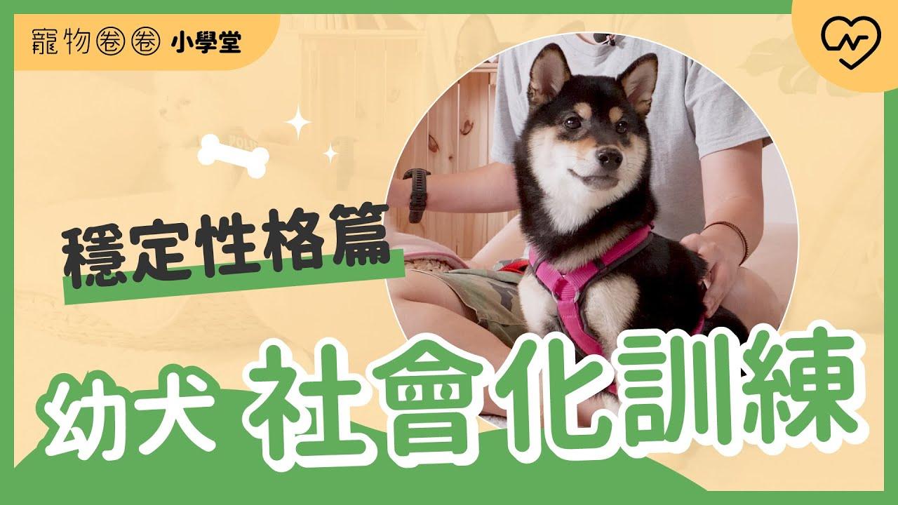 穩定個性養成術!幼犬的社會化訓練(下)狗狗的教育不能等 寵物圈圈小學堂x魔力狗寵物訓練 Ep.4
