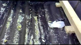 видео Битумная пароизоляциия по профлисту в кровлях