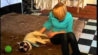 Животные-инвалиды