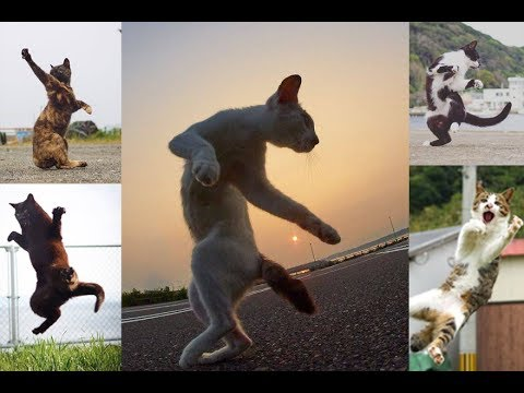 Awesome Catches Dancing Cats Mid Battle