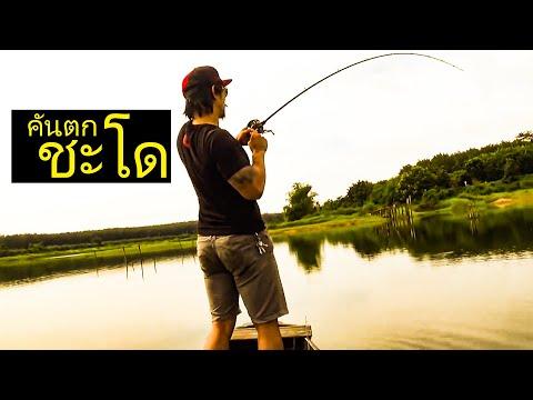 วิธีเลือกคันตกปลาชะโด