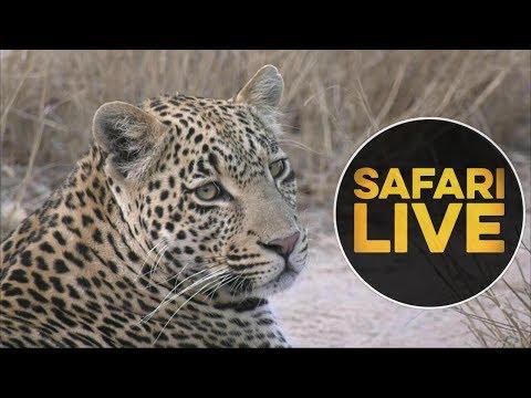 safariLIVE - Sunset Safari - July 14, 2018