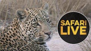 safariLIVE - Sunset Safari - July 14, 2018 thumbnail