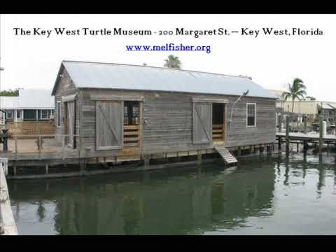 Family Day at The Key West Turtle Museum