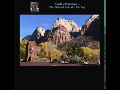Zion National Park with Your Dog