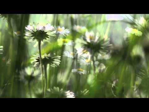 Relaxation musique douce et Nature