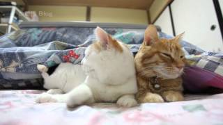 こたつと猫 Cat and kotatsu 2016#2