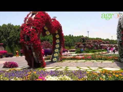 Agro TV-Dubai Miracle Garden, Taman Bunga Ajaib