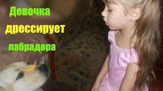 Девочка Катя дрессирует лабрадора. Дружба кота и собаки. Лабрадор Рудик и кот Пушок.Лабрадор и дети