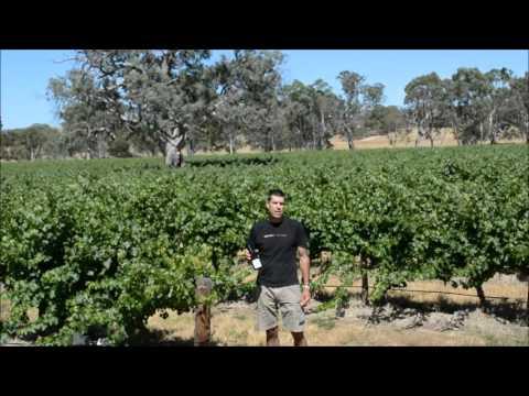 Elderton Wines 2015 Eden Valley Riesling Video Tasting Note