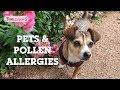 Pets + Pollen Allergies