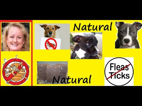 how to get ride of kill fleas ticks naturally on puppy youtube. Black Bedroom Furniture Sets. Home Design Ideas