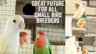 Best opportunities for small bird breeders/ scenario of bird breeding after lockdown