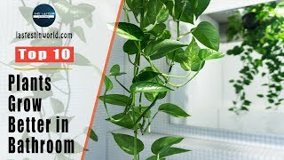 Top 10 Plants That Will Grow Better in Your Bathroom