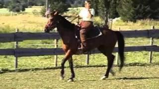 Tri de bétail et équitation western
