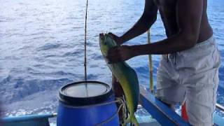 Sri Lanka,ශ්‍රී ලංකා,fishing trip on a trawler Mahi Mahi (05)