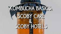 Kombucha Basics: Scoby care & Scoby hotels