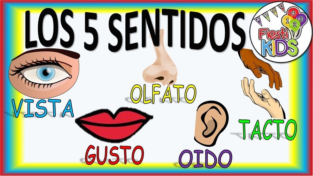 Los 5 Sentidos Para Niños Renovado The Five Senses For Children New